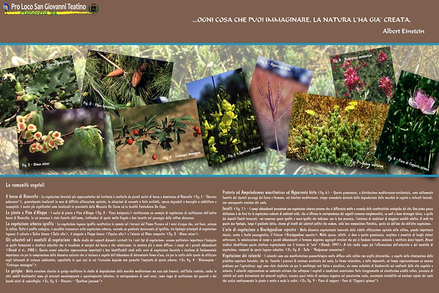Le comunità vegetali